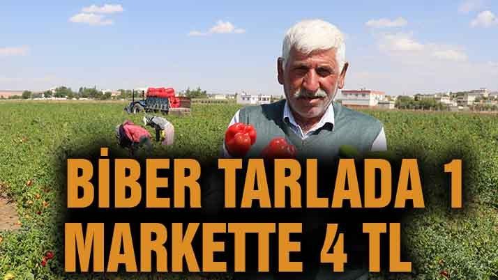 Biber tarlada 1, markette 4 TL