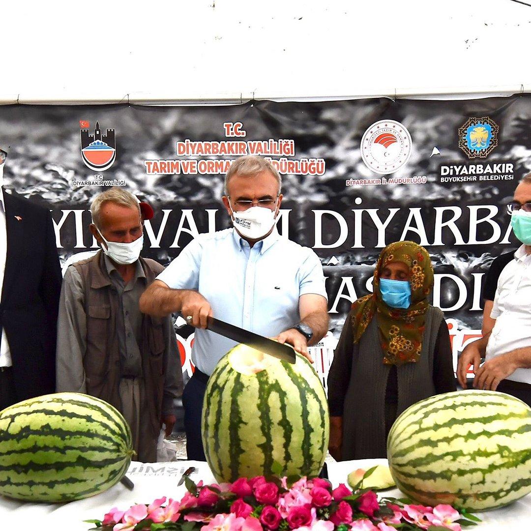 Diyarbakır'da yarışacak tescilli karpuzların hasadı başladı