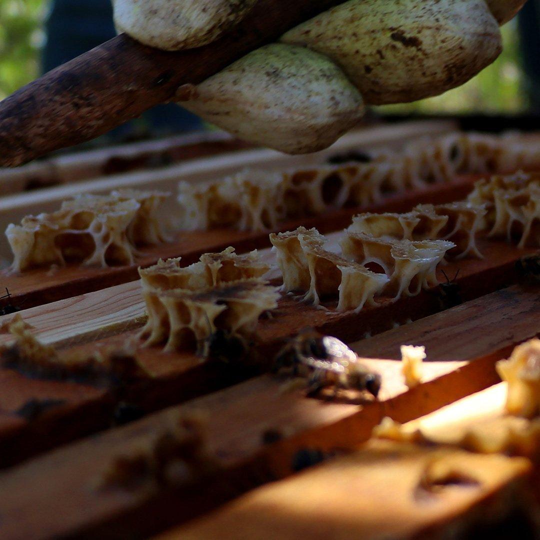 Gaziantep''te arı sağımı başladı