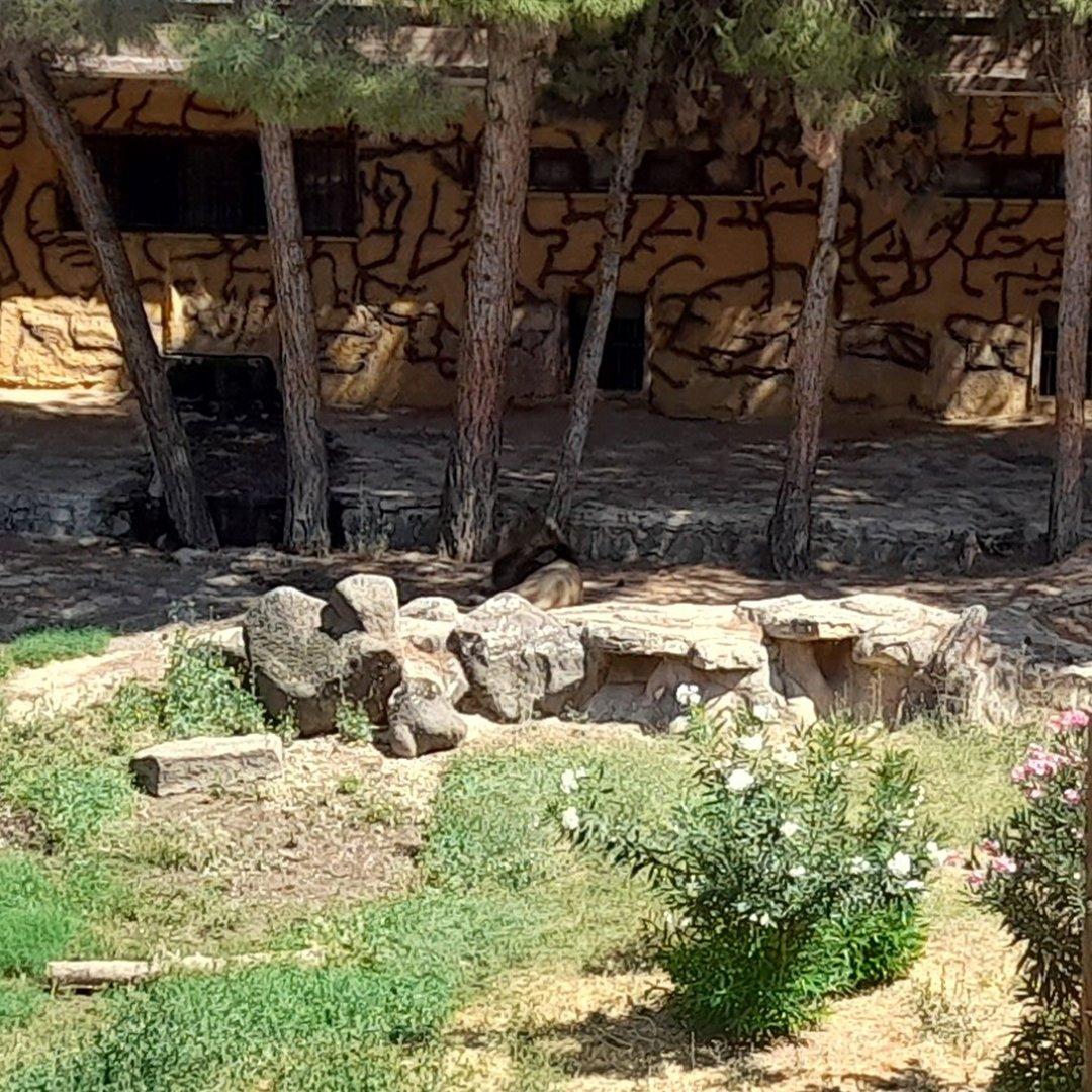 Hayvanat bahçesini birbirine katan aslanın kafesi görüntülendi