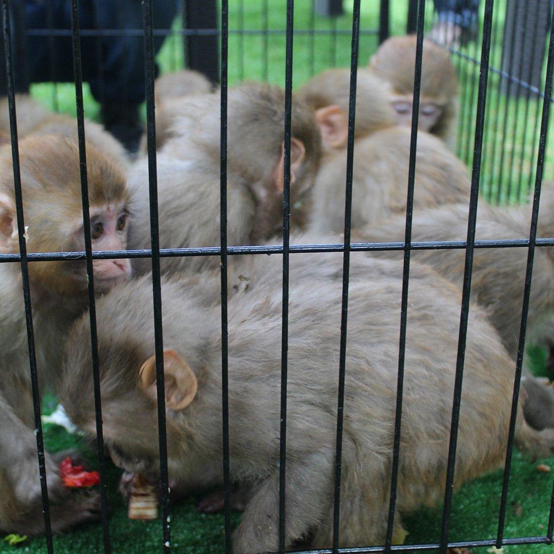 Maymunlar sınırda kurtuldu